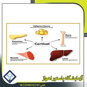 هرمونات البنكرياس