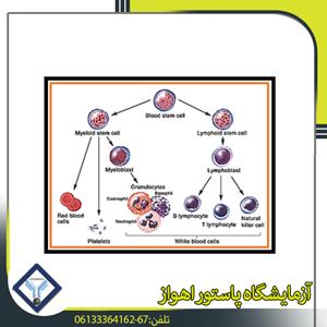 تشخيص أمراض نقص المناعة