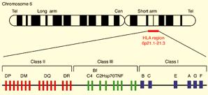 الكشف عن الأليلات (HLA-A) HLA-B و HLA-DR (96) HLA-DR بواسطة الطريقة الجزيئية