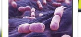 طرق الكشف المختبرية عن المتفطرات